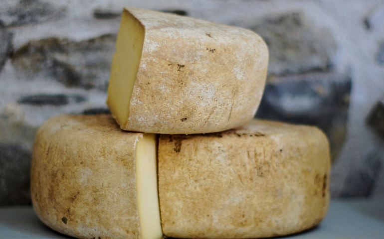 Eight Cheese Trends to Watch in 2019