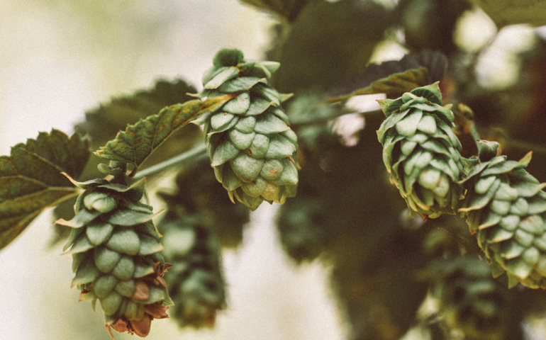 With Rotational IPAs, Brewers and Beer Geeks Go Deep on Small-Batch Brews and Experimental Hops