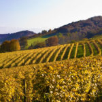 8 Reasons to Sip Your Way Through the Wines of Southwest France