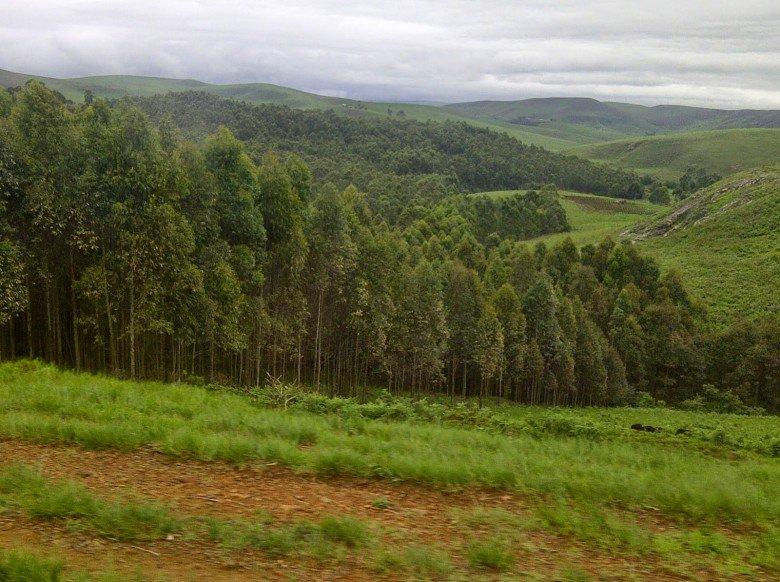 Mambilla-Plateau-Gashaka-Gumti-Park-780x582