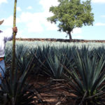 Tequila Can Be Made Sustainably, but That Doesn't Mean It Necessarily Is