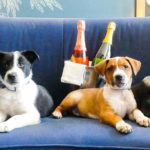 This Hotel Will Deliver Puppies And Prosecco To Your Room