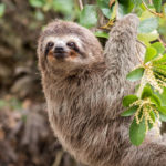 U.S. Zoo Debuts Slothen Bräu, a Beer Brewed by a Sloth