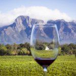 vineyard-0