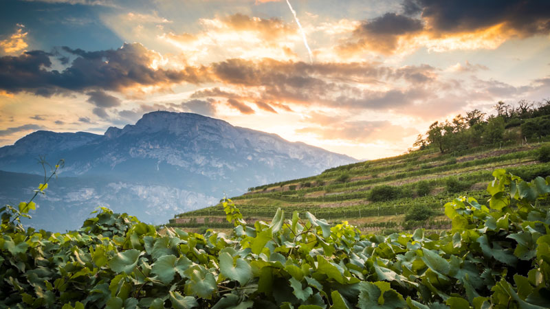 Giulio Ferrari was one of the first viticulturists to imagine the incredible potential of the foothills of the Dolomite mountains for grape cultivation