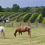Here's Everything You Need to Know About Virginia Wine [INFOGRAPHIC]