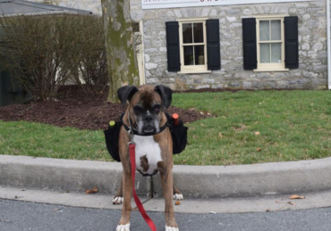 Heroic Dog Provides Curbside Wine Deliveries for a Maryland Winery