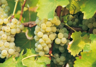 Five Soothing Sauvignon Blancs for Lockdown and Beyond