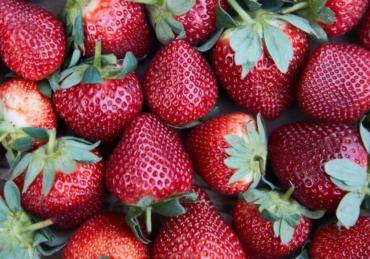 The Strawberry Fields Recipe
